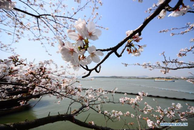Yuantouzhu scenic spot in Wuxi, east China's Jiangsu Province